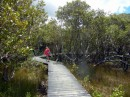 A walkway through the mangroves on the Hatea River, just across the river from the Whangarei Marina.