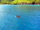 We were amazed to see several large manta rays visit the bay on a daily basis.