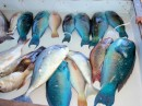 The blue fish are parrot fish; quite good, actually - it