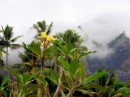A lonely yllow blossom atop a tree on Hiva Oa.