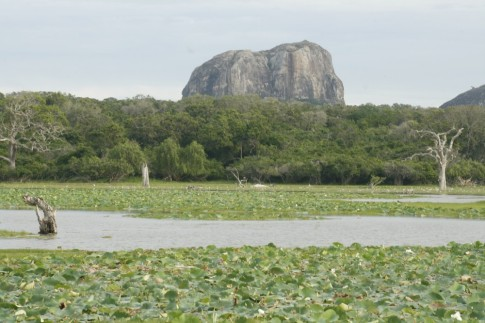 Yala National Park - elephant rock