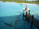 Compass Cay-cleaning conch