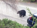 Neighborhood Bear visits.