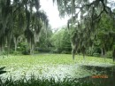 Middleton Place Plantation, Charleston