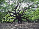 Angel Oak from the other side on a sunny day when a friend of Randy