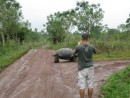 We took a taxi to a farm where the tortoises are allowed to roam free.  Many of them were clustered in a field near the tourst shop but here is a pic of Shawn photographing a wild one that crossed our path as we were leaving.