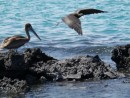 Heron and Frigate Birds