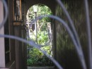Peeking Into A Charleston Courtyard