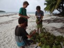 Ben, Moses (s/v Smoke) and Liam, collecting green coconuts for drinking.