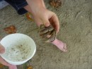 In their free time, Keiton, Skye and Liam went crab hunting.