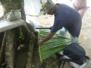 In the mean time, Sikki called on a few of us to help him get palm fronds.