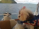 Sophie looks longingly toward the islands. Even she knows that landfall, and that much yearned for walk, is not far away!