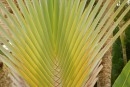 The fronds grow in a tight, flat, interlaced pattern that I