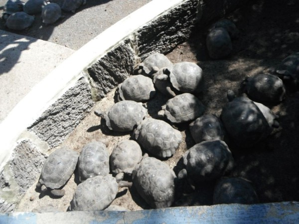 Tortoise factory, 2 year old division