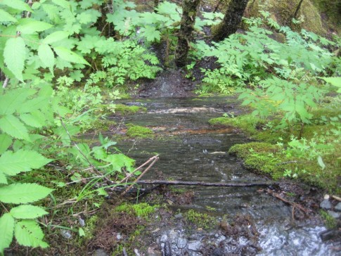 trail near Mendenhall