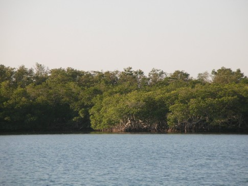 All enjoyed the bird song serenade from the mangroves.