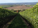 Lucketts Winery, Annapolis Valley, NS