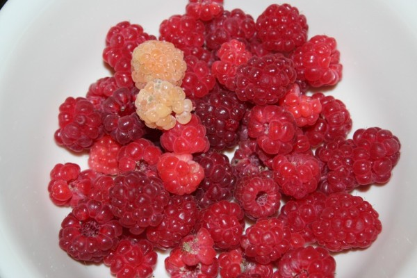 Raspberries from my garden - including 2 kiwi types from my neighbours patch!