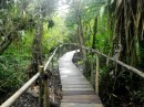 jungle boardwalk at Tortugal