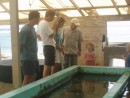 Visit to the turtle sanctuary on Bequia