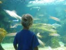 NIcky watching the sharks in an aquarium near Point a Potre, Guadeloupe