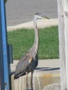 A visitor on our dock...