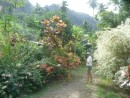 The hike starts along the road through the old village. Stunning gardens, and mangoes to feast on!