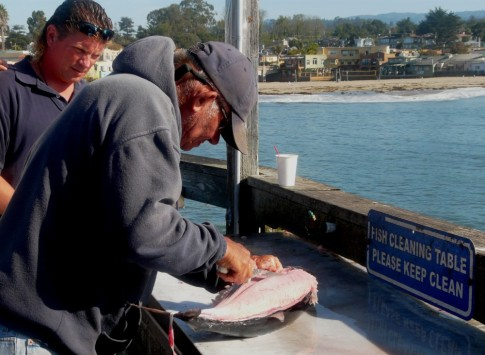 Albacore tuna caught 60 miles offshore- we enjoyed a taste of fresh tuna!