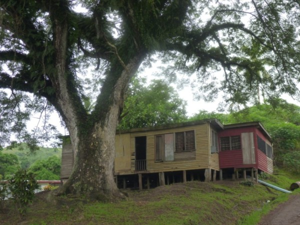 We saw lots of homes built on stilts like this one in and around Savu Savu.