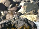 ? can you name this sea bird