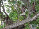boys in the trees greet us to their village