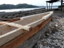 A new outrigger canoe is being made - out of blue water wood.