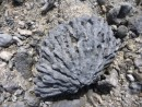 fossilized coral head