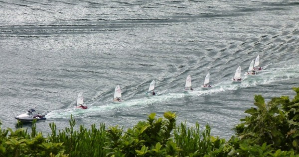 Optomist Race- Picton Harbour