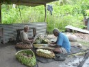 Traditionally the men prepare the tarro root, her grinding cassava for flour.