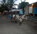 No cars on Gili Air, only horses and foot traffic