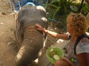 Feeding the elephants was fun!