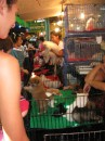 Bangkok - puppies for sale