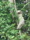 Sloth in CR