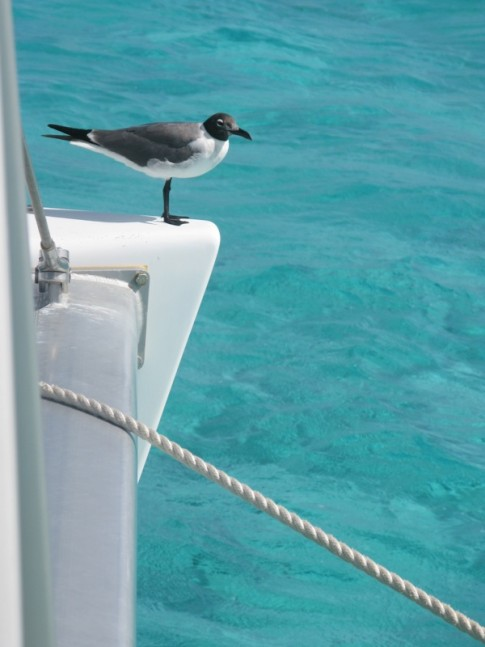 Our Tobago Cays visitor
