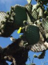 Cactus and a little warbler or finch that jumped into the photo at the last minute