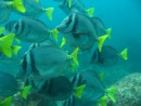 Galapagos dive - school of fish
