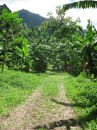 Path to waterfall, Nuku Hiva