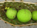 Gifts to Zen: Breadfruits and limes - Niuatoputapu, Tonga