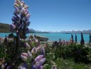 Lake Tekapo...real photo...not a postcard.