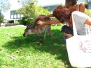 Monique and Cammi petting a hand-raised female kangaroo...yes she