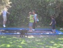 Oscar, George, Cole and Cammi enjoying the built-in trampoline.  Nice!