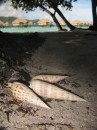 Shell left in front of our hotel room in Tahaa, FP