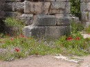 Miletus -wildflowers.