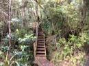 A variety of trails up to the top of Mt. Hobson.: We climbed steps, gravel paths, wooden slats, mus and forded streams.